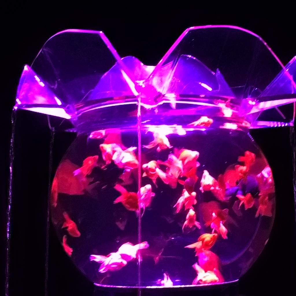 Art aquarium 2015 garden koi for Carpa koi allevamento