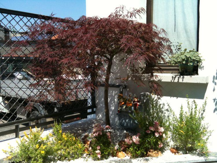 Aiuola con acero legnano garden koi for Acero rosso milano