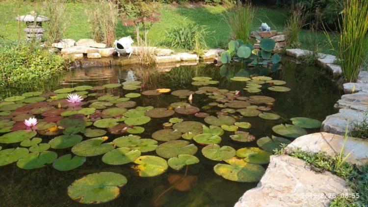 koi pond 18000  lt con impianto oase